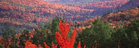 Conservation des forêts