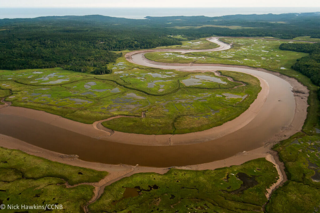 Salt Marsh, Musquash Estuary Marine Protected Area, New Brunswick. Nick Hawkins / Conservation Council of New Brunswick