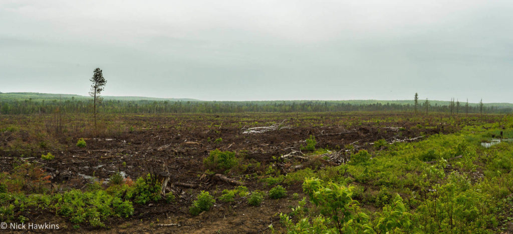 ClearCut-Pano