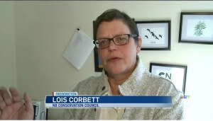 Corbett speaks with CTV News on new pipeline rules