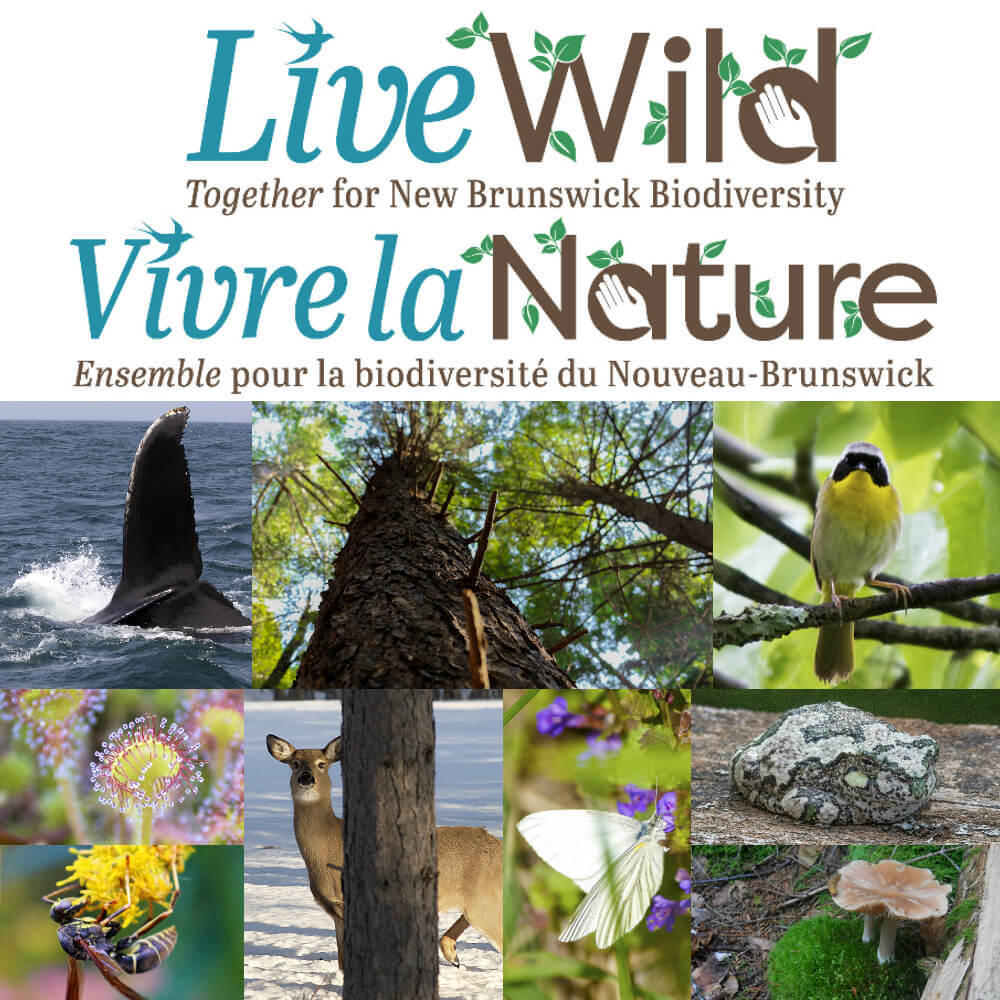 Live Wild - Vivre la Nature - Biodiversity Collage(for all)-1
