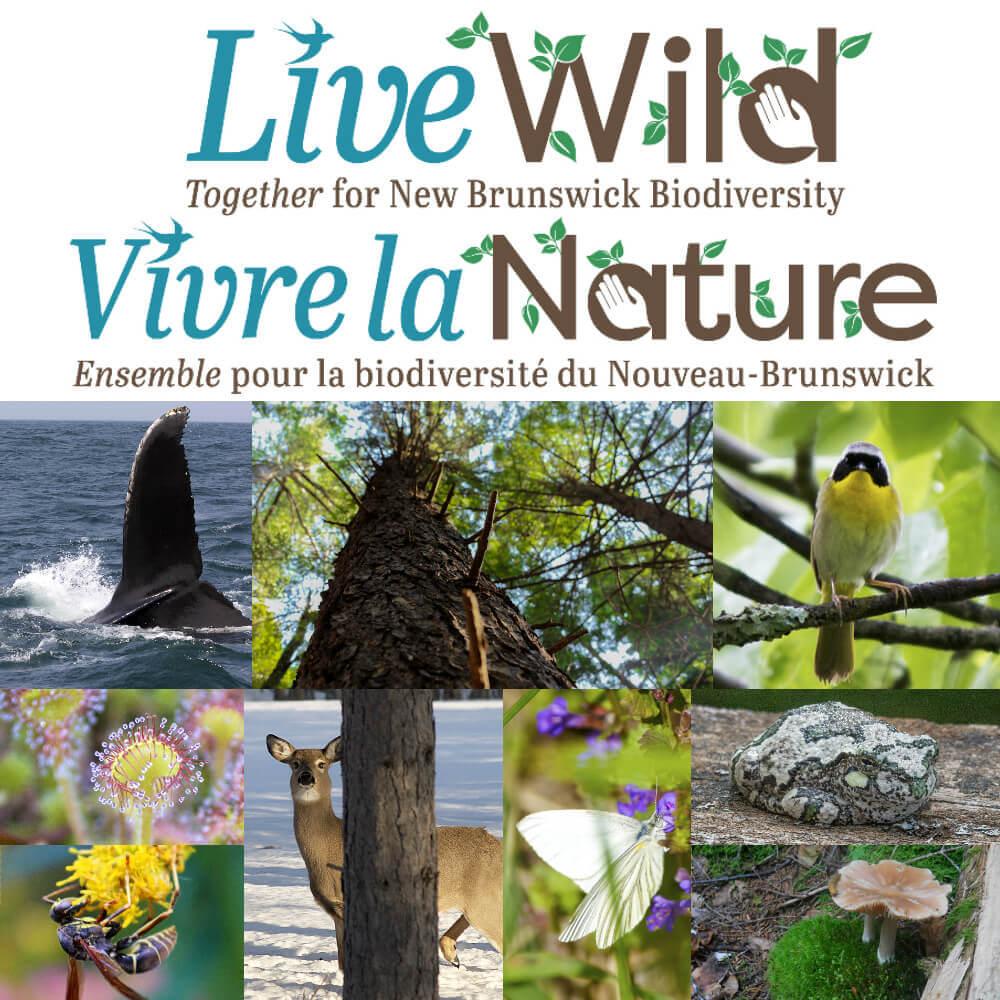 Live Wild - Vivre la Nature - Biodiversity Collage(for all)-1