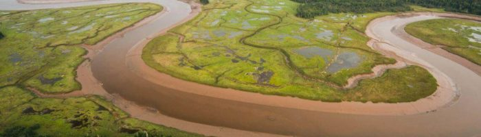 Salt marsh in the Musquash Estuary Marine Protected Area, N.B. Nick Hawkins Photography