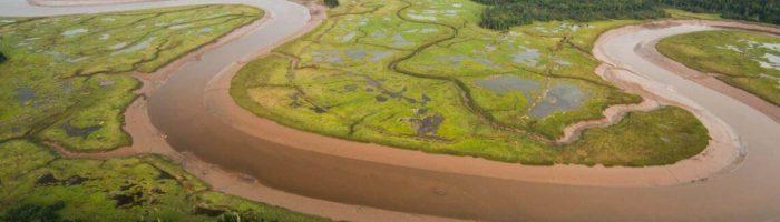 Salt marsh in the Musquash Estuary Marine Protected Area.