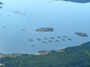 Environment and Climate Change Canada Reluctant to Enforce Regulations against Aquaculture Operators
