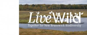 Live Wild — Together for New Brunswick Biodiversity