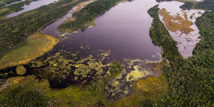 A dynamic mosaic of Acadian forest and freshwater wetlands in southern New Brunswick. Nick Hawkins Photography