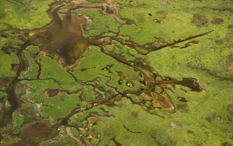Wetland designs