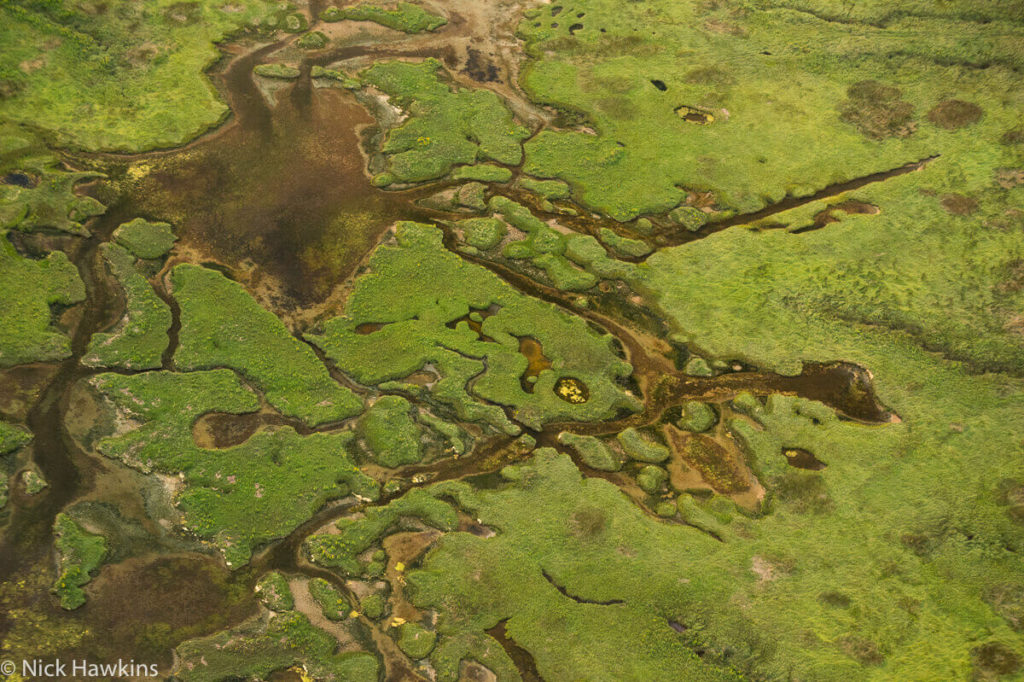 An aerial view reveals intricate wetland designs in the Musquash Estuary.