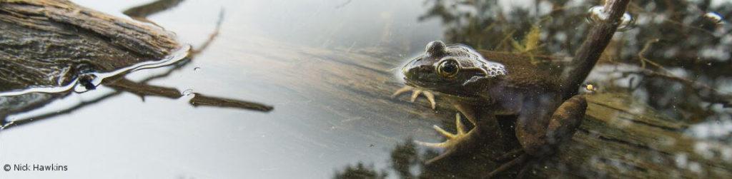 bullfrog_ayers_lakemarked