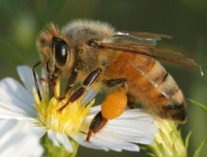 Scientists call for global neonics ban