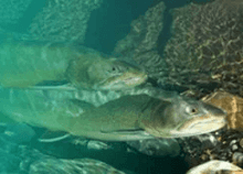 Recover fish populations and protect fish habitat, recommends Standing Committee on Fisheries and Oceans