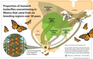EcoNews – Tracking forest loss & the Monarch butterflies