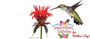 Spring is in the air! Help Mom plant a Pollinator Garden this Mother's Day