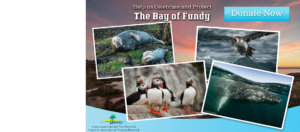 Help celebrate and protect the Bay of Fundy!