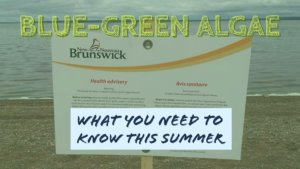 EcoNews — What you need to know about blue-green algae this summer