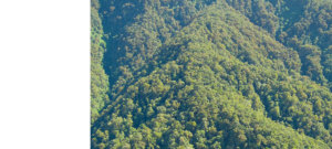 Species in initially intact forest landscapes are particularly vulnerable to forest loss