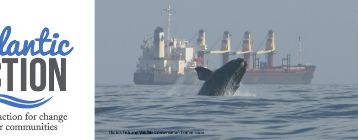 """Eighth right whale death sparks call for """"complete review"""" of shipping lanes"""