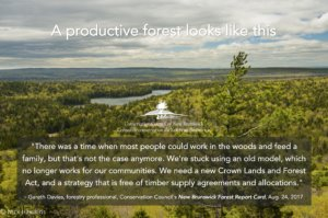 Report calling for ecological forestry in Nova Scotia offers roadmap for better forest management in N.B.