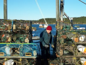 Climate change causing dramatic shift in Bay of Fundy fisheries