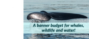 A breakthrough budget for whales, wildlife and water