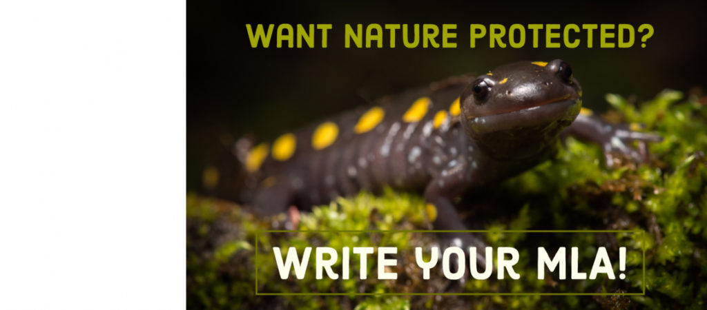 Want nature protected? Write your MLA today!