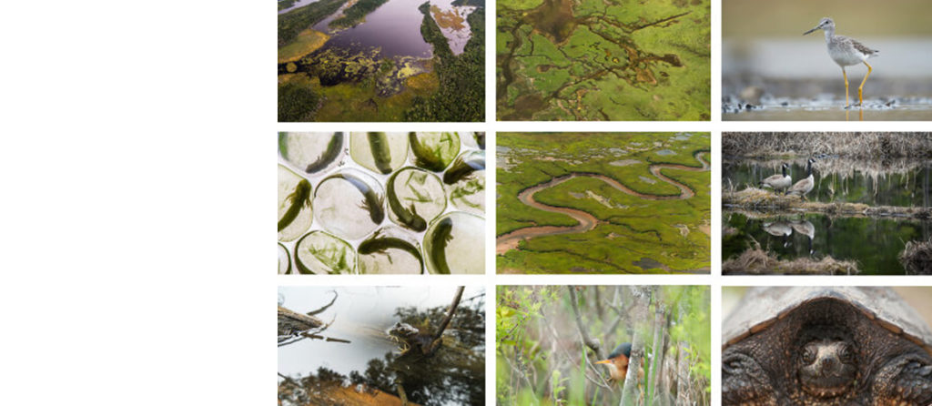 World Wetlands Day: keep your feet dry with our virtual tour!
