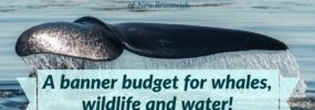 EcoNews — A banner budget for whales, wildlife and water