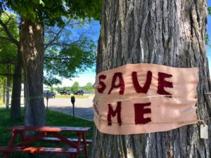 Show your support for the trees at Officers' Square