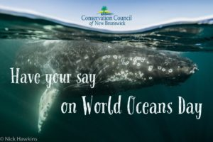 What's going in our water? Have your say on World Oceans Day