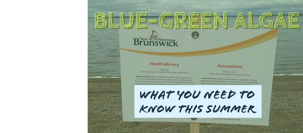 Blue-green algae: here's what you need to know