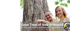 Tune in for weekly conversations about our upcoming book, The Great Trees of New Brunswick, Volume 2