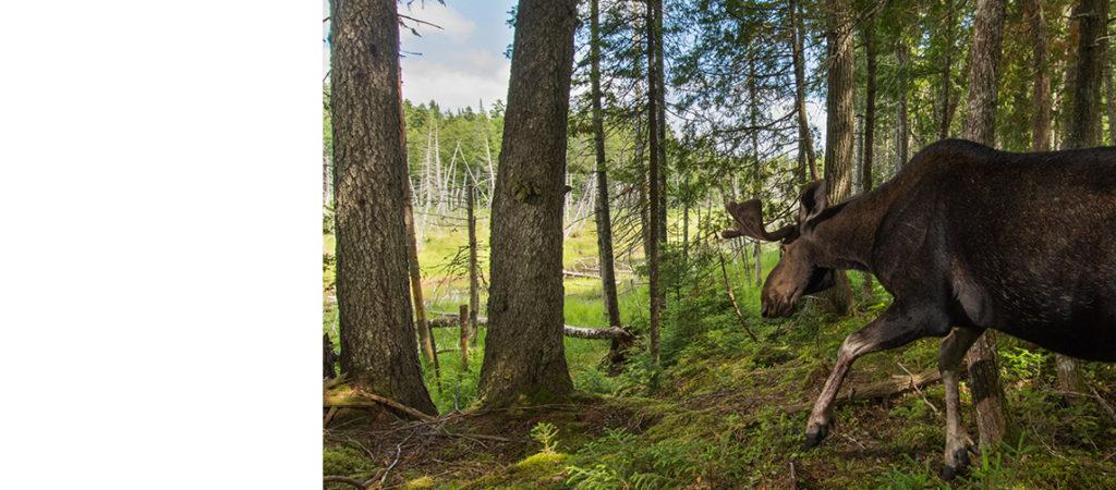 CCNB accueille à bras ouverts le plan visant à protéger une plus grande partie des terres forestières de la Couronne
