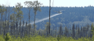 Green Party Leader to introduce resolution to ban herbicide spraying in NB forest