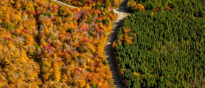 Natural, mixed-wood Acadian forest versus large-scale mono-culture plantations.