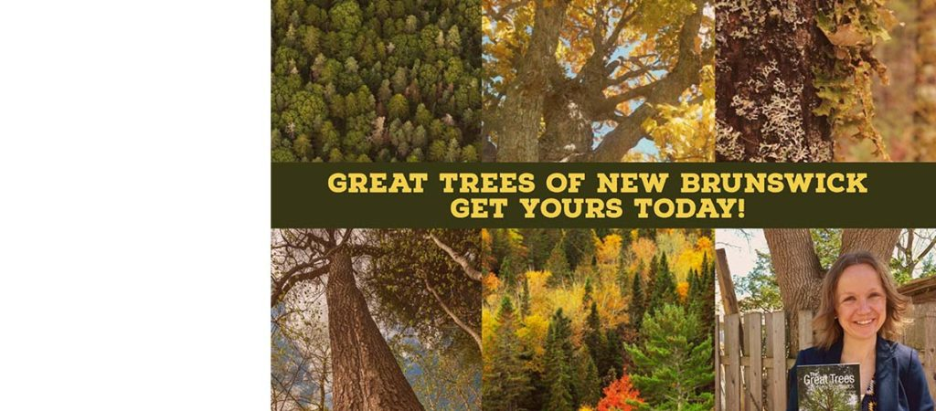 Get your Great Trees of New Brunswick book today!