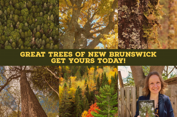 Great Trees Book Feature