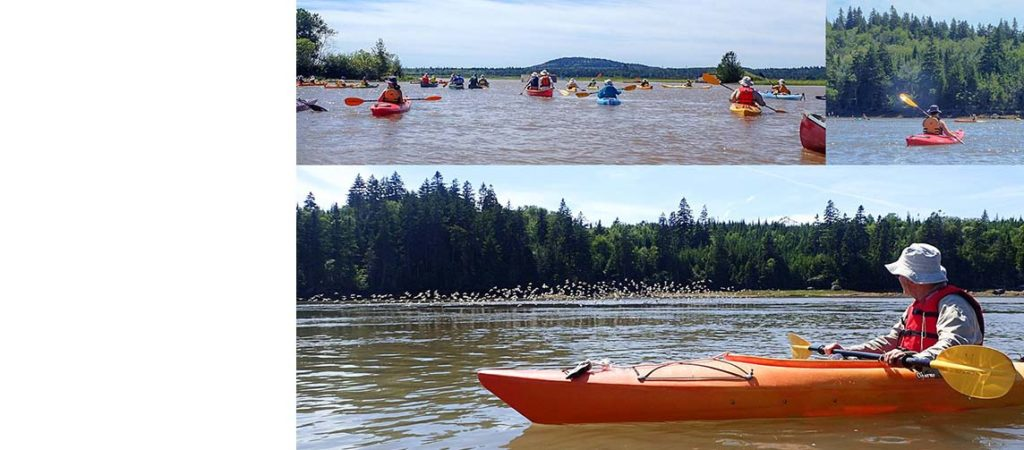 Join the Conservation Council for the 2019 Musquash Paddle!