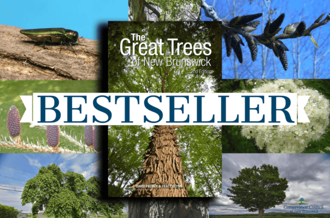 Great Trees Graphic Best Seller